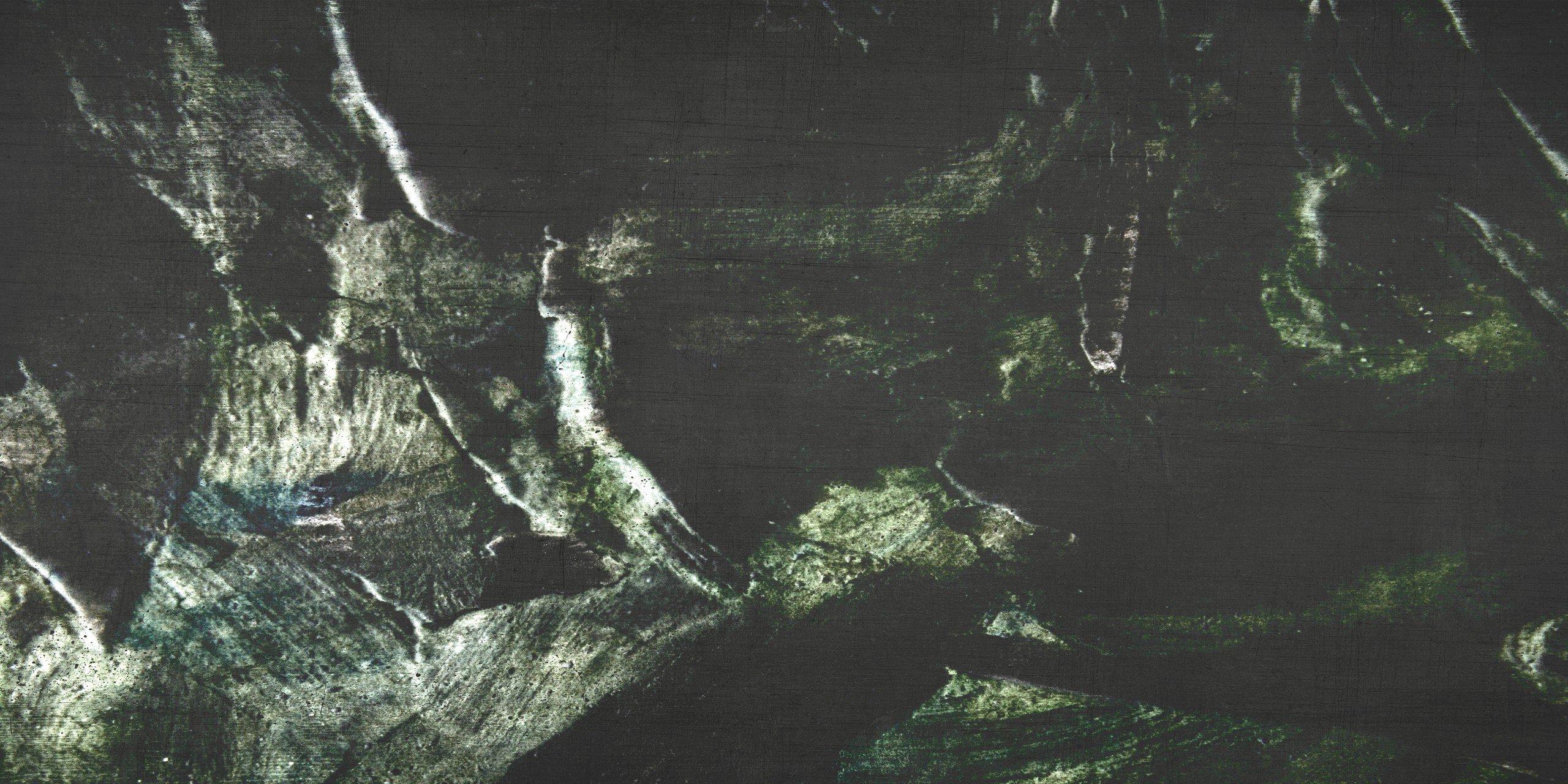 carta-da-parati-tree-roots