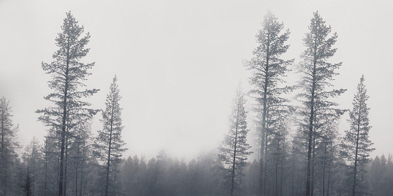 carta-da-parati-bosco