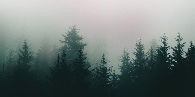 carta-da-parati-forest